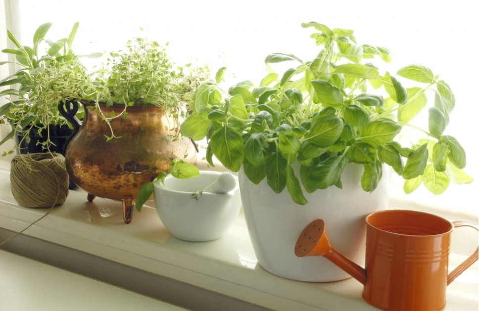 Plants growing next to garden windows